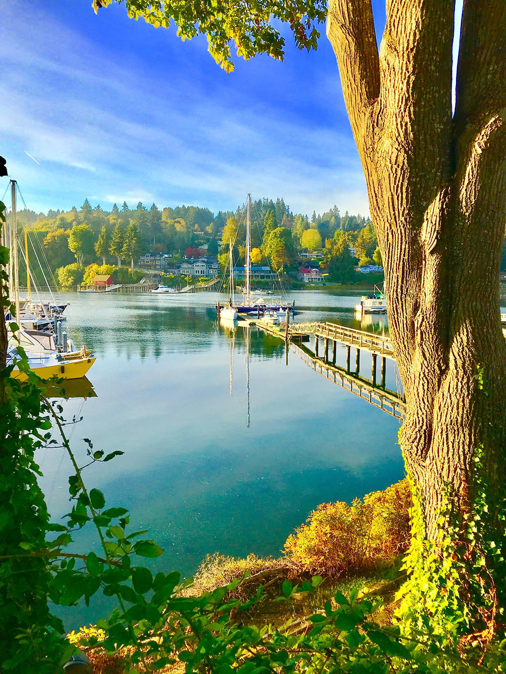 Pam Sproul - Harbor Autumn Colors